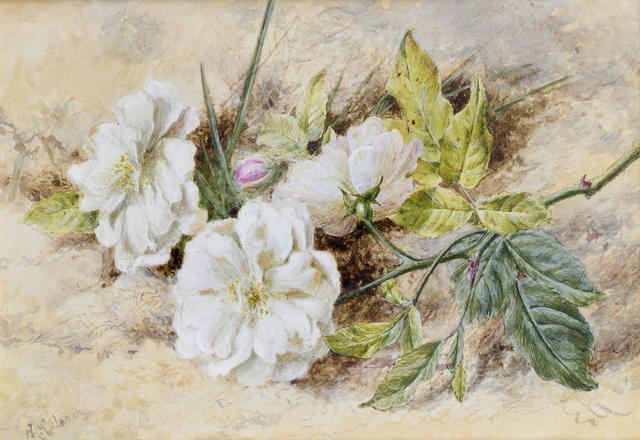 Helen Cordelia Angell, née Coleman (British, 1847-1884) A still life of a dog rose 12.7 x 18.4 cm. (