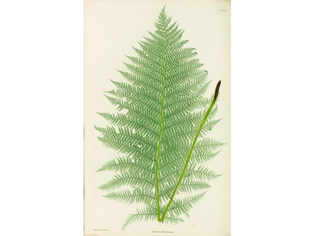 MOORE (THOMAS) The Ferns of Great Britain and Ireland... edited by John Lindley... Nature-printed by