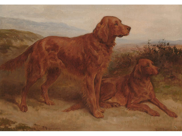 Basil Bradley (British, 1842-1904) A portrait of two Red Setter - 'Tyrone & Geraldine'.