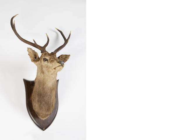 A stag's head trophy