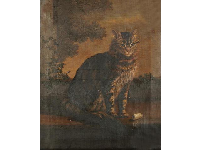 English School, 19th Century Portrait of a cat.