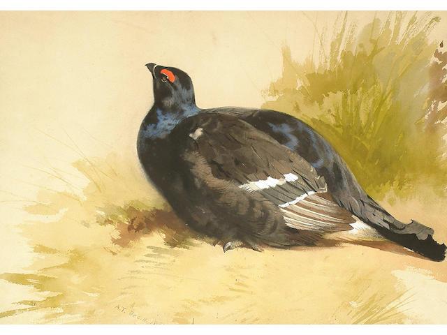 Archibald Thorburn (British, 1860-1935) Black Grouse.