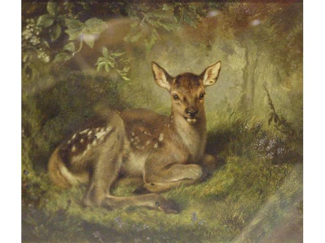 Samuel Carter Faun resting