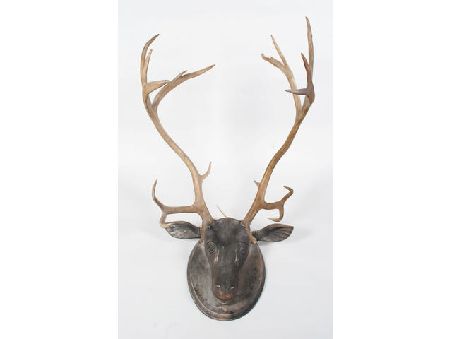 A 19th century carved hardwood stag's head