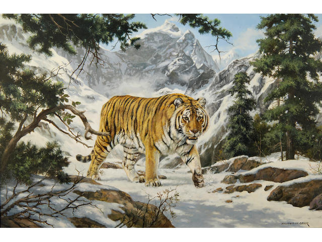 Willem S. de Beer (South African, b.1941) 'Siberian Tiger - Chamkatka region, Russia'