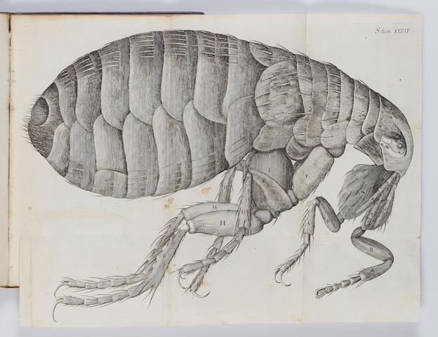 HOOKE (ROBERT) Micrographia: or Some Physiological Descriptions of Minute Bodies Made by Magnifying Glasses, FIRST EDITION, FIRST ISSUE