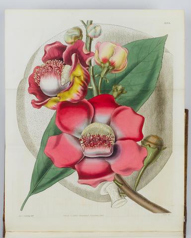 CURTIS (WILLIAM) The Botanical Magazine; or, Flower-Garden Displayed, vol. 1-130 in 109