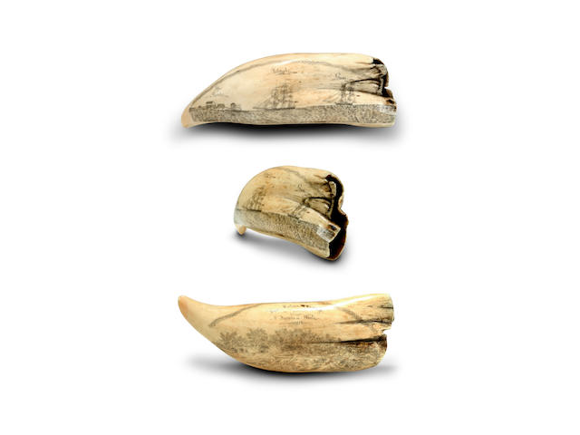 An early scrimshawed sperm whale's tooth, circa 1840