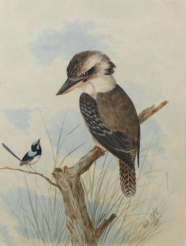 Neville Henry Peniston Cayley (Australian, 1853-1903) A female Laughing Kookaburra, Dacelo novaeguineae, with a male Superb Fairy-wren Malurus cyaneus 45.7 x 34.3 cm. (18 x 13½ in.)