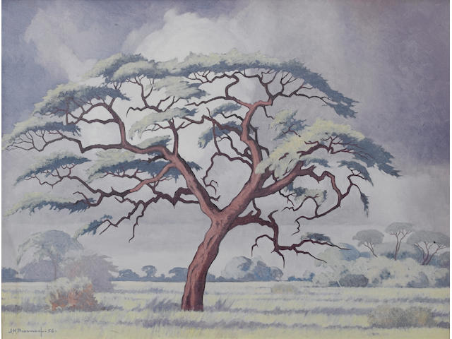 (n/a) Jacob Hendrik Pierneef (South African, 1886-1957) Camelthorn tree, Kalahari 45.5 x 61 cm. (18 x 24 in.)