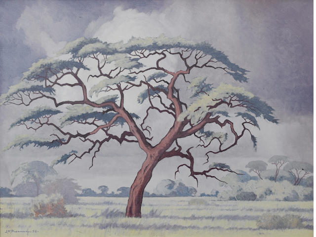 Jacob Hendrik Pierneef (South African, 1886-1957) Camelthorn tree, Kalahari 45.5 x 61 cm. (18 x 24 i