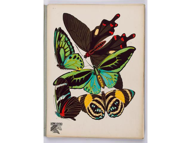 SEGUY (E.A.) Papillons