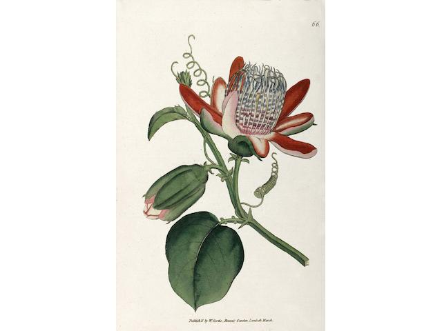 CURTIS (WILLIAM) The Botanical Magazine; or, Flower-garden Displayed, vol. 1-6 bound in 3 vol.
