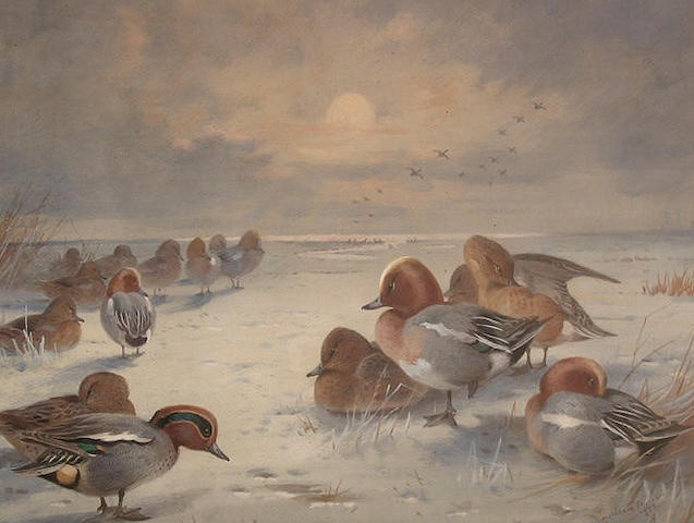 Archibald Thorburn (British, 1860-1935) 'Frosty Sunrise (Teal and Wigeon)'