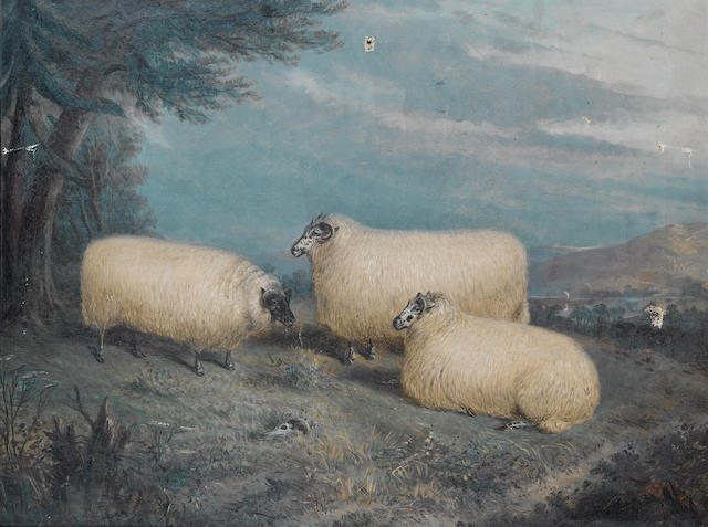 (n/a) Richard Whitford (British, 1854-1887) Prize sheep at rest in a landscape 53 x 68.5 cm. (21 x 27 in.)