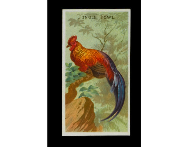 Allen & Ginter Birds of the Tropics set (50), G-EX.
