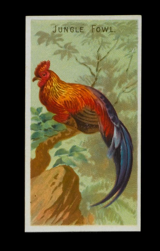 Allen & Ginter Birds of the Tropics set (50), G-EX.