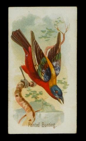 Allen & Ginter Song Birds of the World set (50), F-VG.