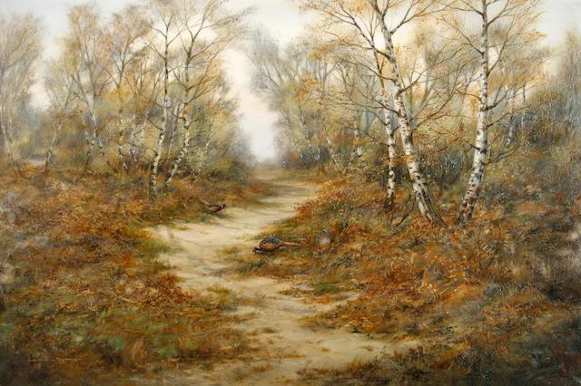 Colin W. Burns (British, born 1944) Pheasants in a birch wood 51 x 77 cm (20 x 30 1/4 in).
