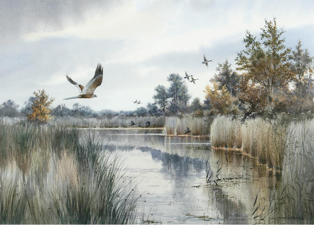 Colin W. Burns (British, born 1944) Marsh harrier, mallard and coot beyond, Fleggburgh 38 x 53.5cm (15 x 21in).