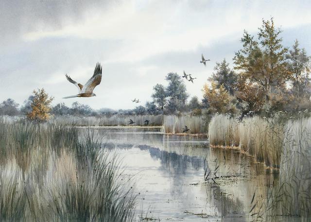 Colin W. Burns (British, born 1944) Marsh harrier, mallard and coot beyond, Fleggburgh 38 x 53.5cm (15 x 21in).