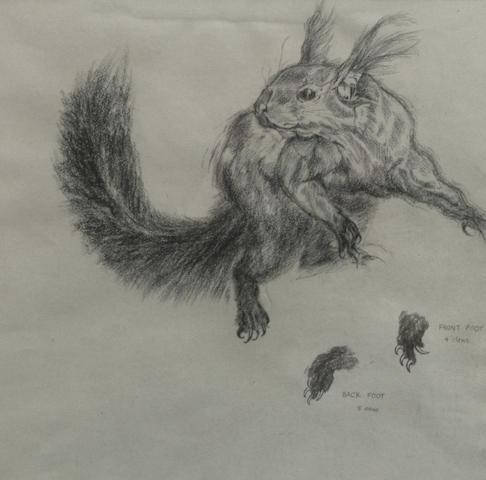David Blackburn (British, 1939) Squirrel (Label verso, The Art Gallery of Western Australia, Loan, Sept '79.)