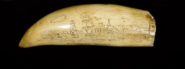 A scrimshawed sperm whale's tooth,  late 19th century,  7in (18cm) long