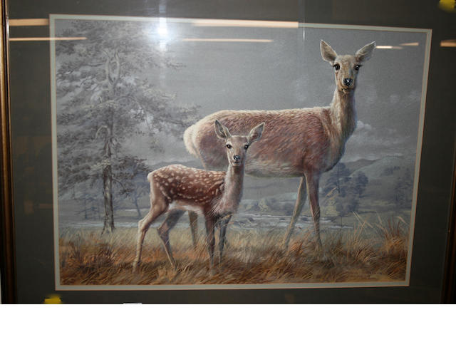 Spencer Roberts (born 1920) Red deer hind and fawn 51cm x 52cm.