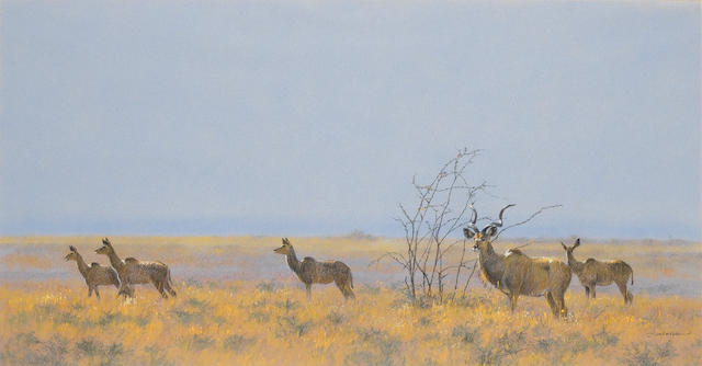 Kim Donaldson (South African, born 1952) Kudu herd 47 x 90 cm. (18½ x 35½ in.)