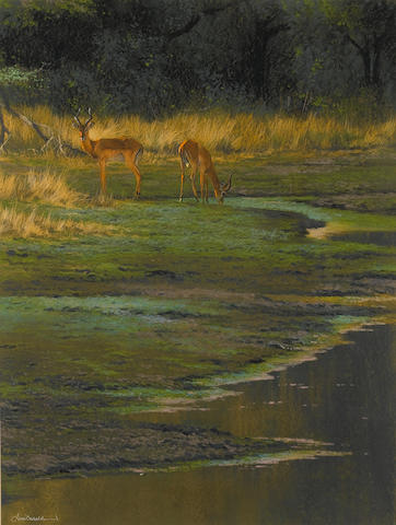 (n/a) Kim Donaldson (South African, born 1952) Impala at the watering hole 68.5 x 52 cm. (27 x 20½ in.)