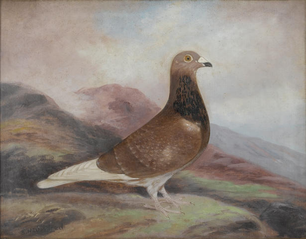 Edward Henry Windred (British, 1875-1953) The prize-winning pigeon 'Winalot'  35.5 x 46 cm. (14 x 18