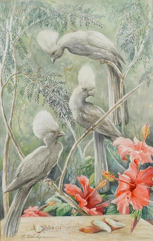 Margaret (Peggy) Irene Chadwick Arridge (South African, born 1921) Grey louries 56 x 35.5 cm. (22 x 14 in.)