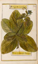 HERBAL, MANUSCRIPT Catalogus plantarum, a manuscript herbal