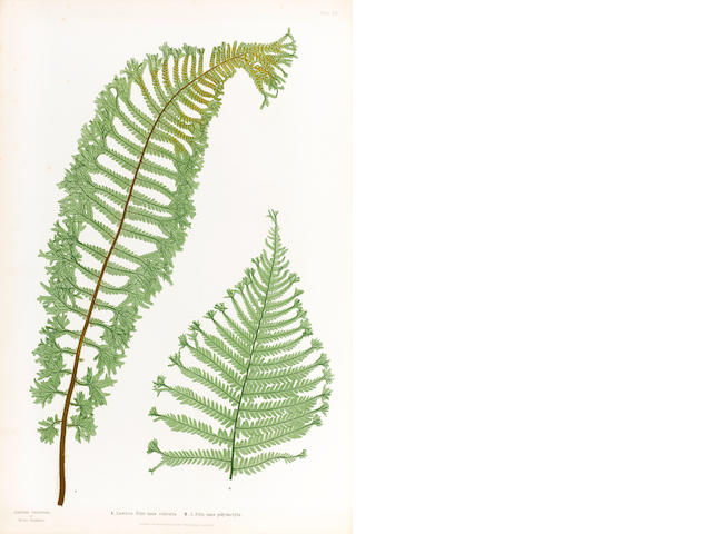 MOORE (THOMAS) The Ferns of Great Britain and Ireland