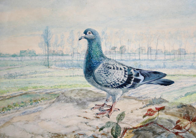J. Baldauf (Austrian, late 19th/early 20th Century) Pigeon on a bank with trees beyond, a pair each