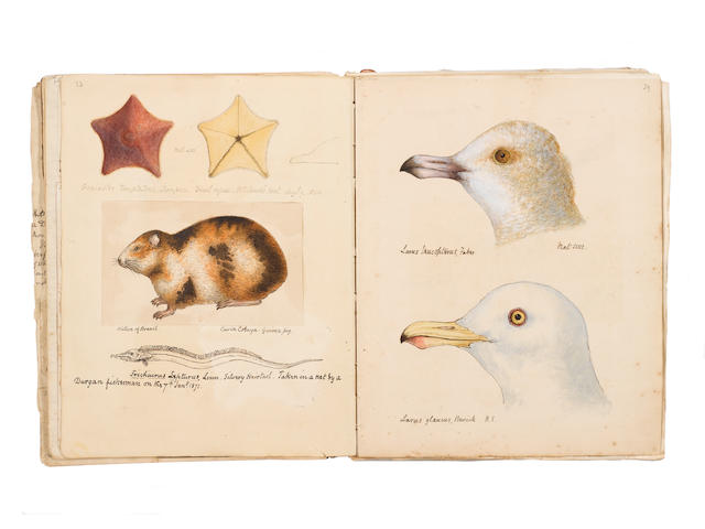 "COCKS (WILLIAM PENNINGTON) ""Hand-Coloured Drawings of Birds, Fishes, Insects, Shells, Fungi, Actinae, Alagae, and Marine Curiosities Collected in Falmouth and Neighbourhood... 1842-1878"" [title on upper cover]"