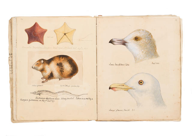 """COCKS (WILLIAM PENNINGTON) """"Hand-Coloured Drawings of Birds, Fishes, Insects, Shells, Fungi, Actinae, Alagae, and Marine Curiosities Collected in Falmouth and Neighbourhood... 1842-1878"""" [title on upper cover]"""