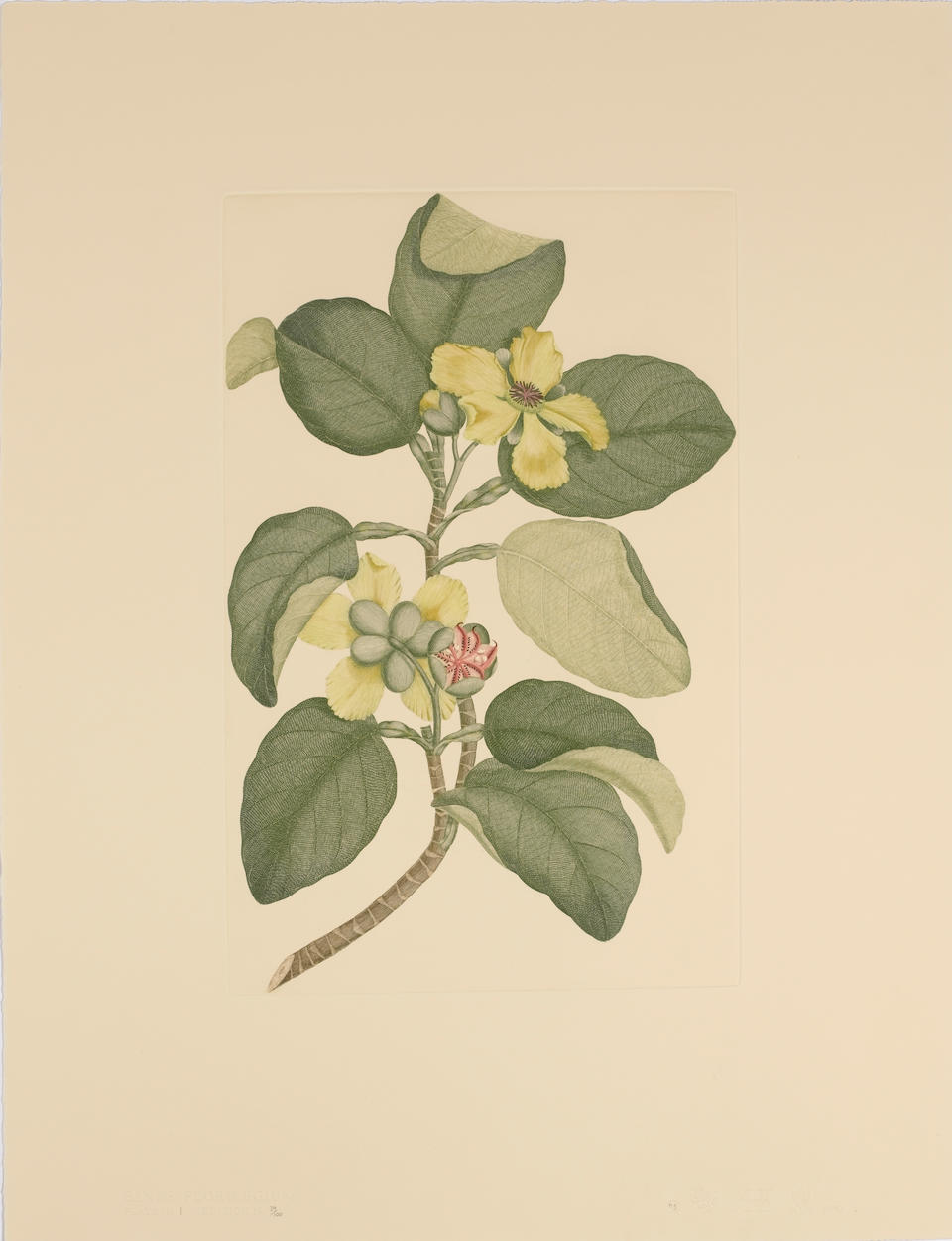 BANKS (JOSEPH) Banks' Florilegium. A Publication in Thirty-Four Parts of Seven Hundred and Thirty-Ei
