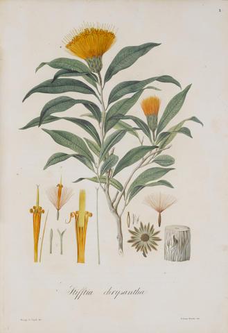 MIKAN (JOHANN CHRISTOPH) Delectus florae et faunae brasiliensis