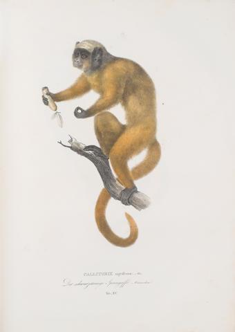 SPIX (JOHANN BAPTIST VON) Simiarum et vespertilionum brasiliensium speciae novae, ou histoire-naturelle des espéces nouvelles de singes et de chauves-souris observées et recueillies pendant le voyage dans l'intérieur de Brésil exécuté par ordre de S.M. Le Roi de Bavière dans les années 1817, 1818, 1819, 1820