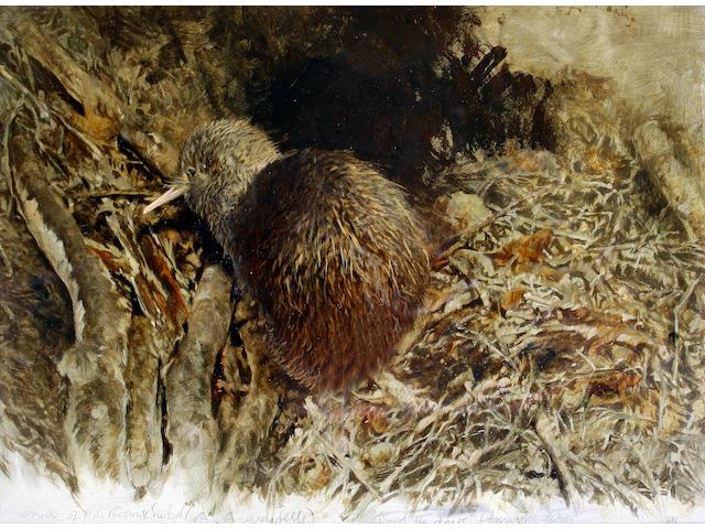 Raymond Harris Ching (born 1939) Kiwi chick