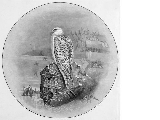 Millais/Lodge engraving of a Gyr Falcon