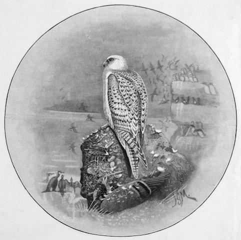 Millais/Lodge engraving of a Gyr Falcon