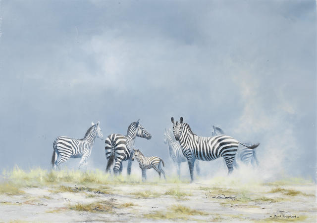 (n/a) David Shepherd, O.B.E. (British, born 1931) Zebras