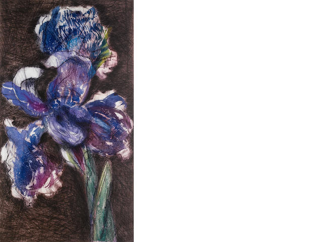 William Joseph Kentridge (South African, born 1955) Dutch Iris 2