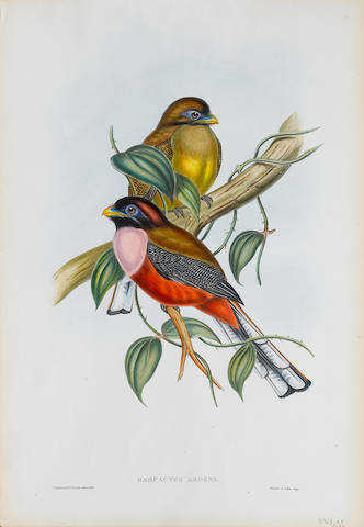 John Gould (British, 1804-1881) A Collection Lithographs, by Gould and Richter, finished with contemporary hand colour and gum arabic, on wove paper, the full sheet, various printers; 560 x 385mm (22 x 15 1/4in)(SH) 15 unframed