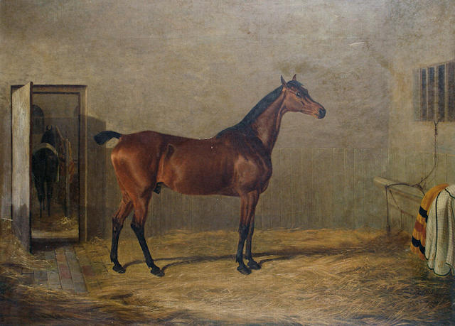 Follower of John Frederick Herring, Snr. (British, 1795-1865) Study of a horse, thought to be of Johnny Cope hunted by Sir George Sitwell, in a stable