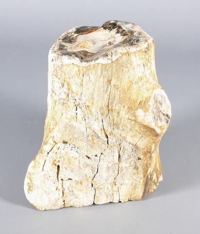 A fossilised wood trunk section (Madagascar) 48cm.