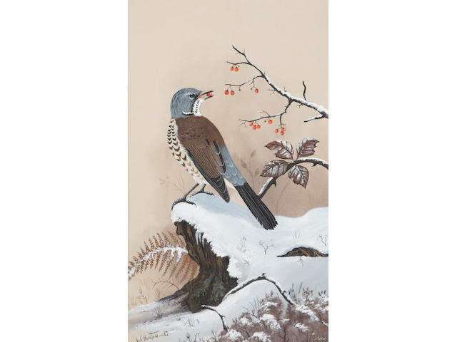William Huston (Irish, 20th Century) Kestrel, Peregrine Falcon, Blackbird, Song Thrush each signed and dated,