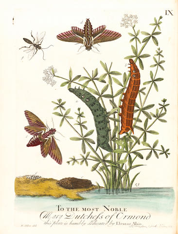 ALBIN (ELEAZAR) A Natural History of English Insects